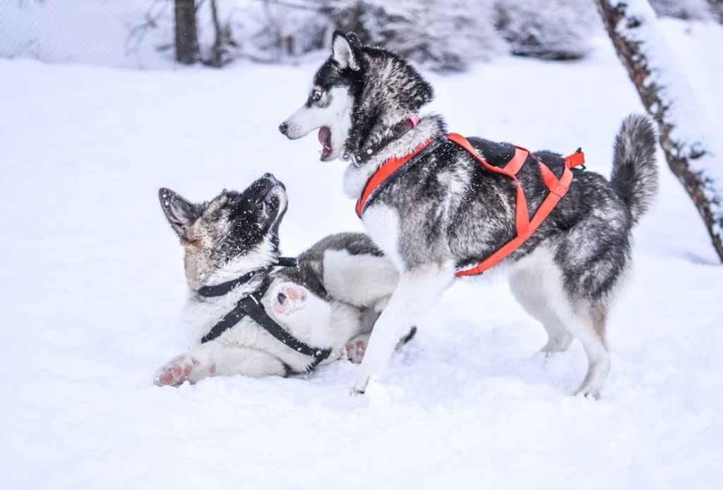 Ecco come proteggere il cane dal freddo