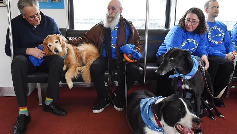 pet therapy in aeroporto