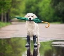 Cani e pioggia, idee e spunti per attività alternative
