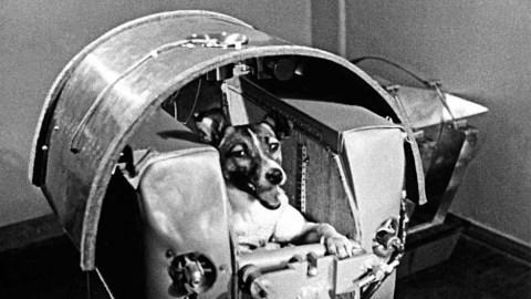 Laika, Belka e Strelka: storie di cani spaziali
