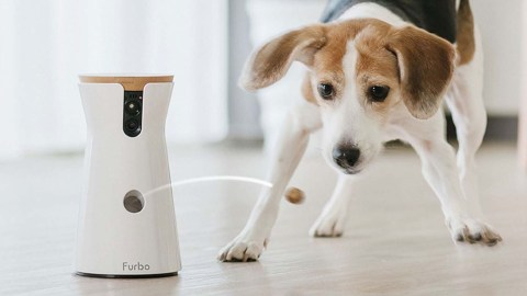 Idee regalo: Furbo Dog Camera in offerta a 139 euro