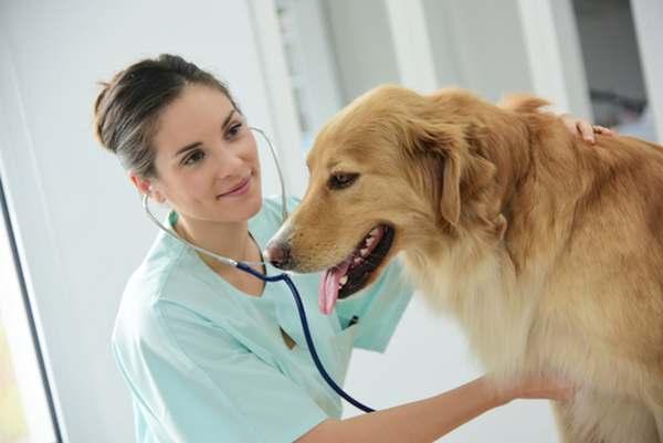spese veterinarie