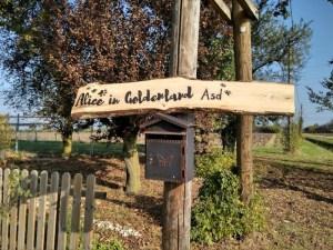 Alice in Goldenland ASD