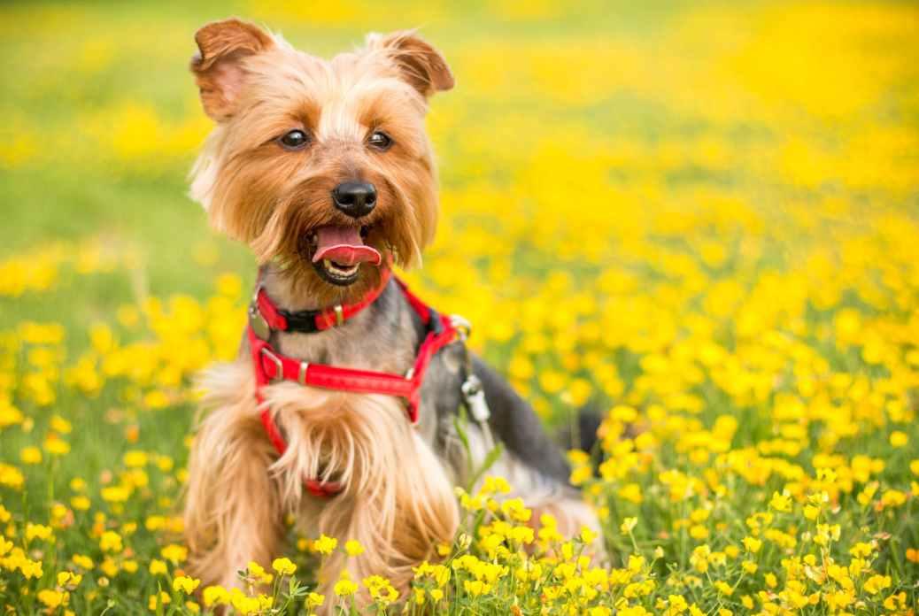 proteggere il cane con rimedi naturali