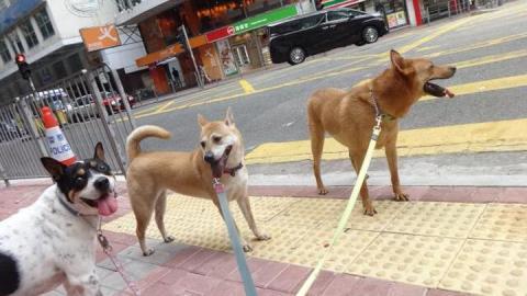 SHENZHEN DOG FRIENDLY: ecco i microchip e le aree cani
