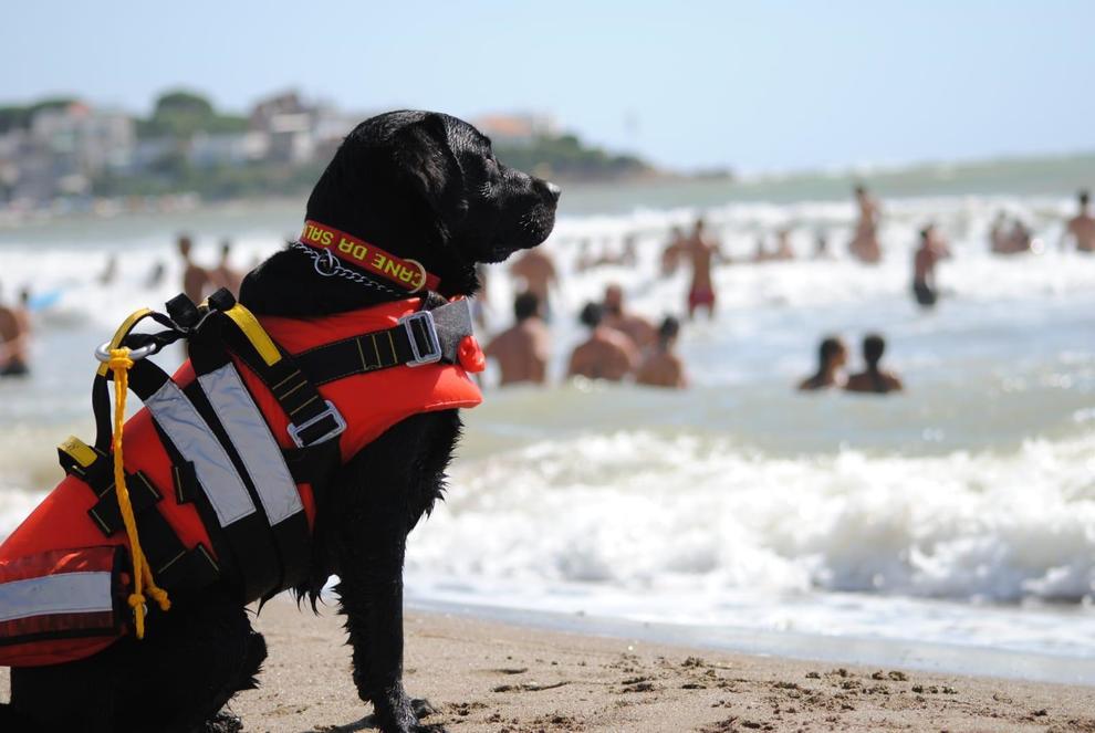il tuo cane ti salverebbe?