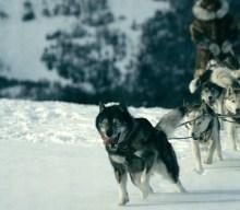 BALTO E TOGO: a FIRENZE un'area cani a loro dedicata
