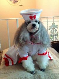 Cutie Nurse Halloween Dog Costume | BaxterBoo