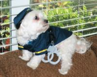 K-9 Cop Dog Halloween Costume by Casual Canine | BaxterBoo