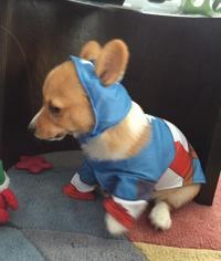 Marvel Captain America Dog Costume | BaxterBoo