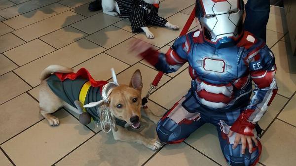 Marvel Thor Dog Costume