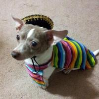 Mexican Sarape Dog Costume | BaxterBoo