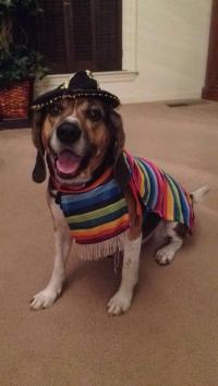 Mexican Sarape Dog Costume | BaxterBoo