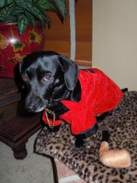 Party Hounds Smoking Jacket Dog Halloween Costume | BaxterBoo