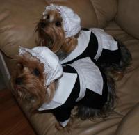 Pilgrim Girl Dog Costume   BaxterBoo