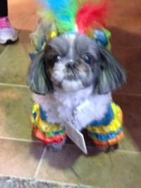 Polly Parrot Halloween Dog Costume | BaxterBoo