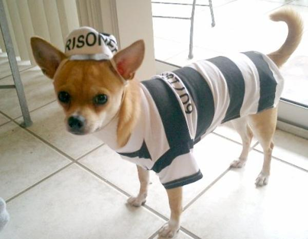 Prisoner Dog Halloween Costume by Casual Canine