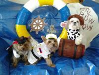Sea Captain Dog Costume | BaxterBoo