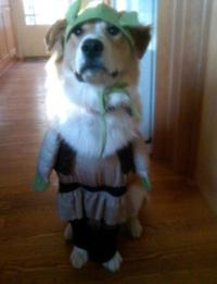 Shrek Dog Halloween Costume   BaxterBoo