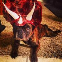 Triceratops Dog Costume | BaxterBoo