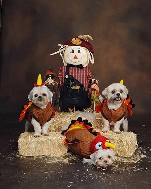 Turkey Dog Costume