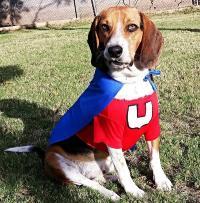 Underdog Dog Halloween Costume | BaxterBoo
