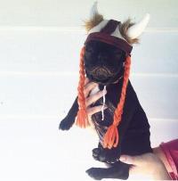 Viking Hat with Braids Dog Costume   BaxterBoo