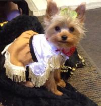 Western Dog Costume Dress | BaxterBoo
