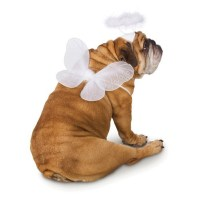 Angel Pet Wings Dog Costume - White | BaxterBoo