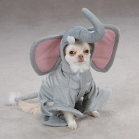 Elephant Costume for Dogs by Casual Canine | BaxterBoo