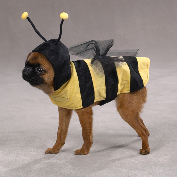 Honey Bee Costume for Dogs by Casual Canine