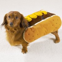 Hot Dog with Mustard Dog Halloween Costume | BaxterBoo