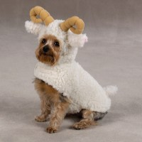 Lil' Sheep Dog Costume by Zack & Zoey