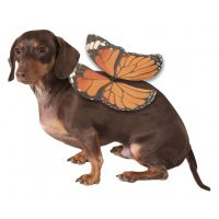 Monarch Butterfly Wings Dog Costume | BaxterBoo