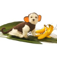Monkey Dog Costume by Doggie Design | BaxterBoo