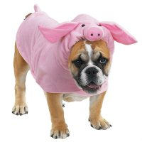 Piggy Dog Halloween Costume by Casual Canine