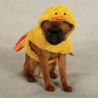 Quackers Duck Halloween Dog Costume at BaxterBoo