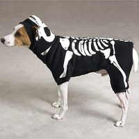 Skeleton Glow Bones Dog Costume by Casual Canine - Black ...