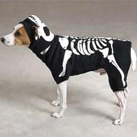 Skeleton Glow Bones Dog Costume by Casual Canine - Black ...