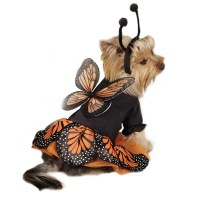 Monarch Butterfly Dog Costume | BaxterBoo