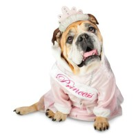 Zelda Princess Halloween Dog Costume | BaxterBoo