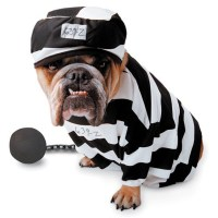 Zelda Prisoner Halloween Dog Costume | BaxterBoo