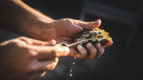 Shuck It: How to Shuck an Oyster in the Bay Area (Or Anywhere)