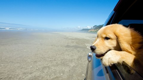 Your Dog-Friendly Bucket List: Where to Take Your Pooch to Celebrate the Dog Days of Summer