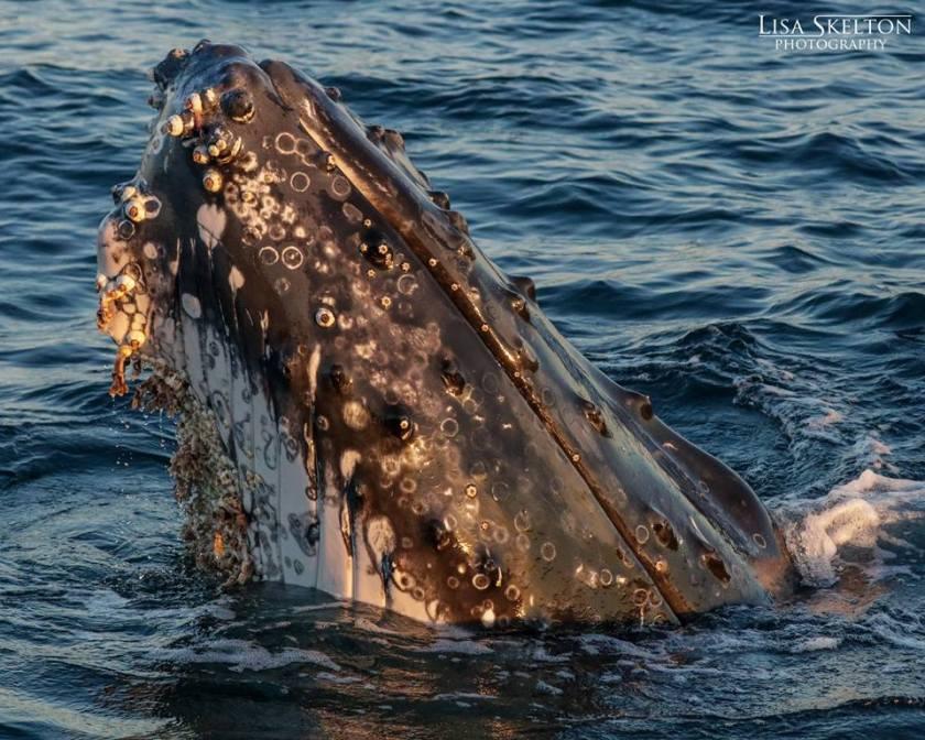 Whale Port Stephens