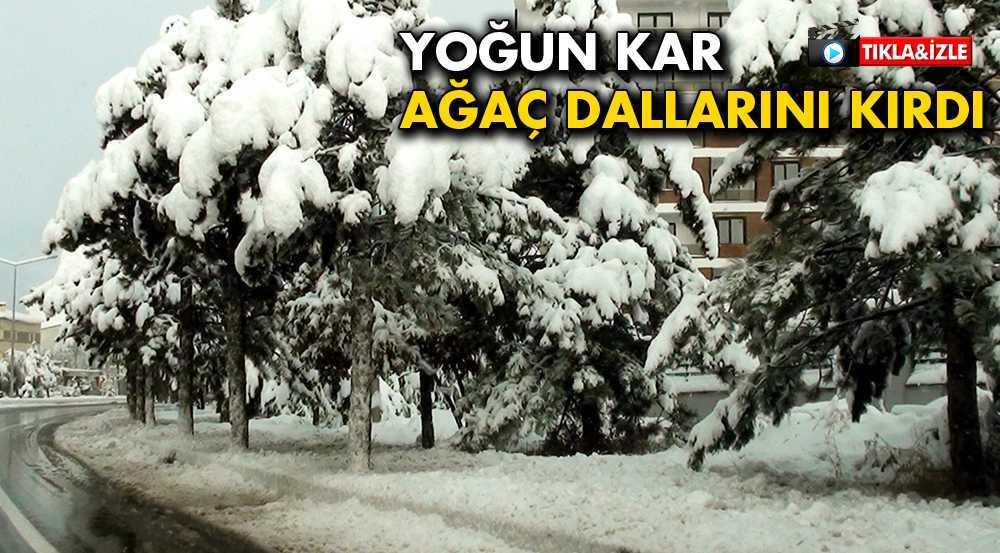 Bayburt'ta Yoğun Kar Ağaçların Dallarını Kırdı