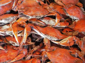 Pile of steamed blue crabs