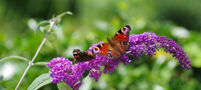 Sommerblumen – Teil zwei