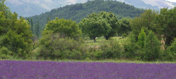 Kurztrip in die Provence zur Lavendelblüte – Teil zwei