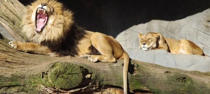 Ein Besuch in Hagenbecks Tierpark